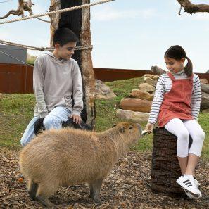 Kids feeding a Capybara